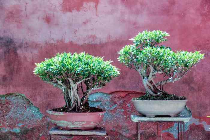 tokyo bonsai
