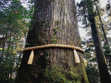 tree yorishiro human tales elena brunello